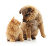 Kitten and puppy. Kitten and puppy on a white background Stock Photography