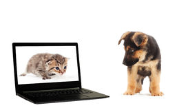 Kitten, puppy and a laptop Stock Images
