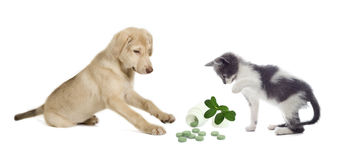 Kitten and puppy Stock Image