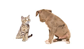 Kitten and puppy looking at each other Royalty Free Stock Images