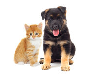 Kitten and puppy looking Royalty Free Stock Photos