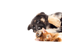Kitten and puppy lying Royalty Free Stock Photo