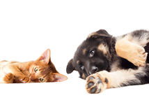 Kitten and puppy lying Royalty Free Stock Images