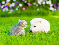 Kitten and puppy playing on the summer lawn Stock Image