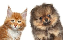 Kitten and puppy. Portrait on white background Stock Photo