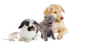 Kitten and puppy and rodents Royalty Free Stock Images