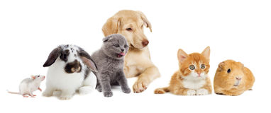 Kitten and puppy and rodents Royalty Free Stock Photography