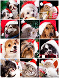 Kitten and puppy , set. Kitten and puppy with santa hats stock photo