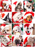 Kitten and puppy , set. Kitten and puppy with santa hats close-up portrait stock images