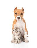 Kitten and puppy sitting together. isolated on white background Royalty Free Stock Photos