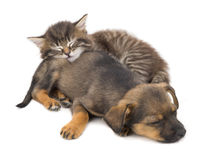 Kitten and puppy sleep. Is isolated on a white background Stock Photo