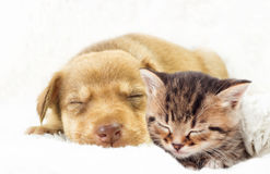 Kitten and puppy sleeping Royalty Free Stock Photography