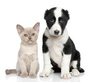 Kitten and puppy together Stock Photo