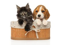 Kitten and puppy together in basket royalty free stock photography