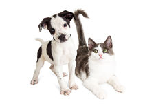 Kitten and Puppy Together Royalty Free Stock Photos