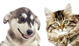 Kitten and puppy together Royalty Free Stock Images