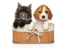 Kitten and puppy together on a white background. Kitten and puppy together in basket on a white background. Baby animal theme stock photos