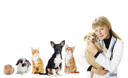 Kitten and puppy and the vet Royalty Free Stock Photography