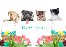 Kitten and puppy watching,  Easter Royalty Free Stock Images