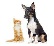 Kitten and puppy watching Stock Images