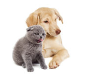 Kitten and puppy watching Stock Image