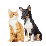 Kitten and puppy watching Royalty Free Stock Images