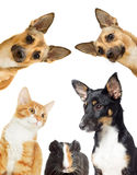 Kitten and puppy watching Royalty Free Stock Photography
