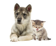 Kitten and puppy. On a white background stock photo