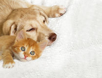 Kitten and puppy Royalty Free Stock Photography