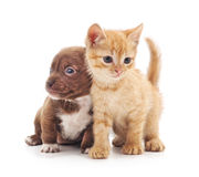 Kitten and puppy. Kitten and puppy on a white background Stock Image