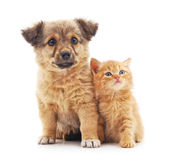 Kitten and puppy. Kitten and puppy on a white background Royalty Free Stock Image