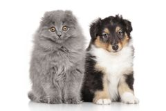 Kitten and puppy on white background Stock Photos