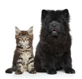 Kitten and Puppy on white Stock Photos