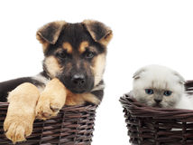 Kitten and puppy Stock Photo