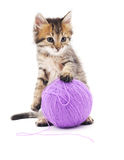 Kitten with purple balls. Stock Images