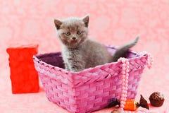 Kitten in the purple box Stock Photos