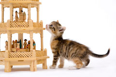 Kitten and a pyramid Royalty Free Stock Photography