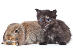 Kitten and rabbit Royalty Free Stock Image