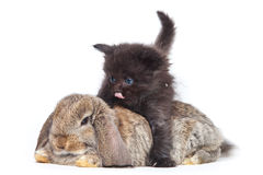 Kitten and rabbit Stock Photo