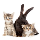 Kitten and Rabbit Stock Image