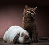 Kitten and rabbit Stock Images