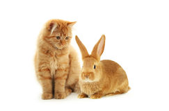 Kitten and rabbit Royalty Free Stock Images