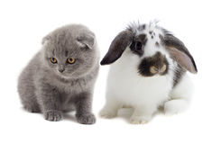 Kitten and rabbit Stock Photos