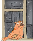 A kitten in the rain in the autumn. Sad red cat sitting at a window Stock Photography