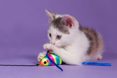 Kitten with rainbow play mouse. Cute kitten with rainbow toy mouse Stock Photo