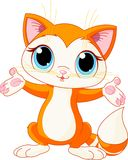 Kitten raising his hands Stock Photo