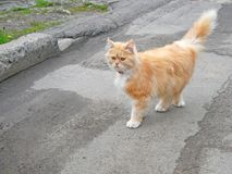 Kitten Rambling Outdoors Royalty Free Stock Photo