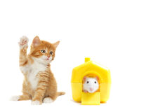Kitten and rat Stock Images