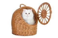Kitten in the rattan carrier Stock Images