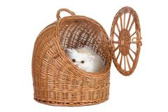 Kitten in the rattan carrier Stock Photography